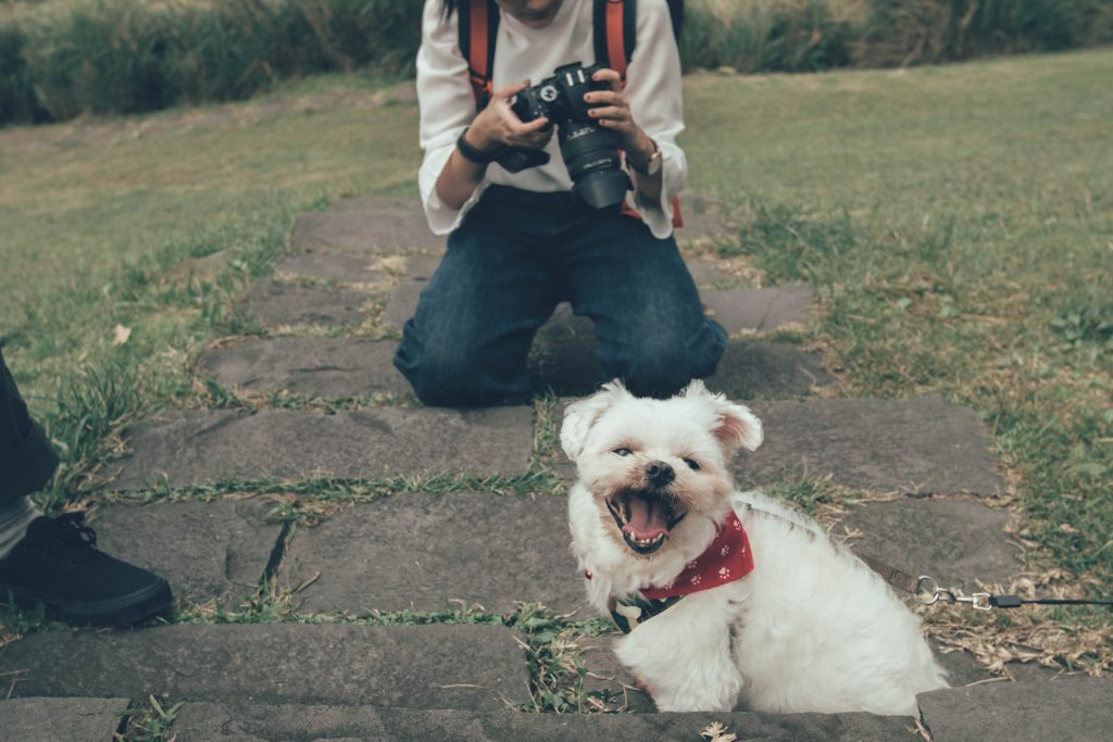 """wildlife photography on your pet - How to turn quarantine into a """"Staycation"""""""