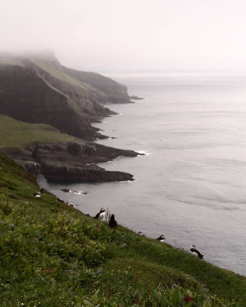 Faroe Islands Mykines Lighthouse Mykines birds - Faroe Islands' most instagrammable places