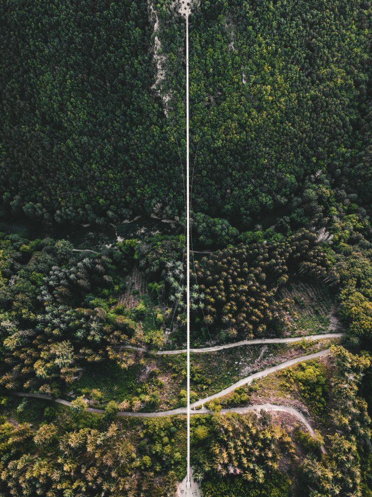 suspension bridge geierlay3 - Hängeseilbrücke Geierlay: Swinging over a German valley