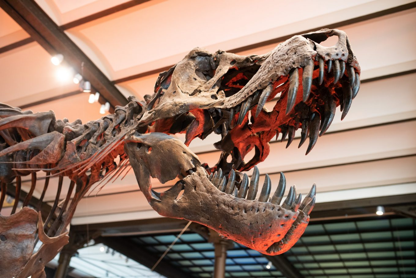 Discovering dinosaurs in Brussels
