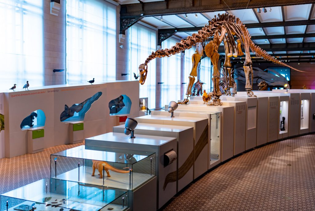 Discovering dinosaurs in Brussels - Discovering dinosaurs in Brussels