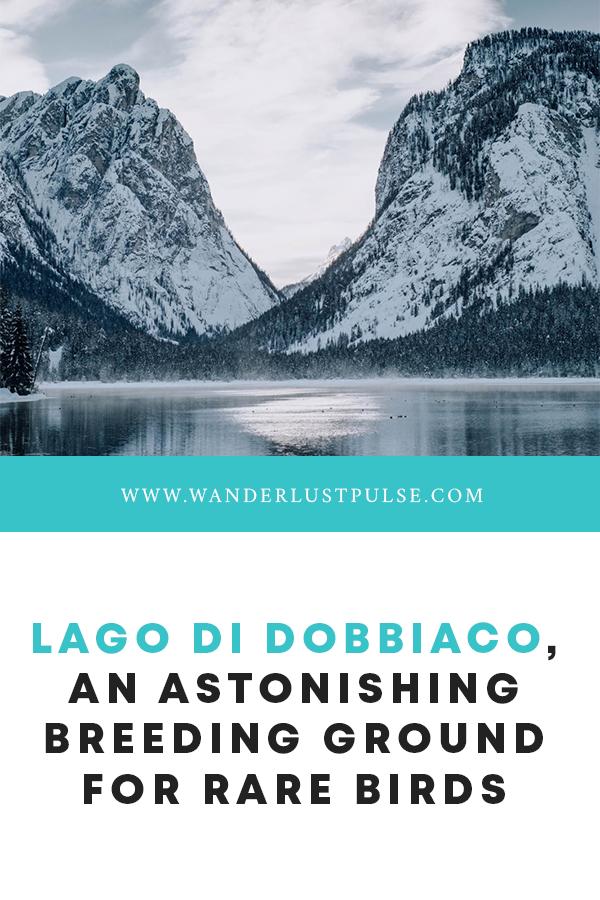 Lago di Dobbiaco - Lago di Dobbiaco, an astonishing breeding ground for rare birds