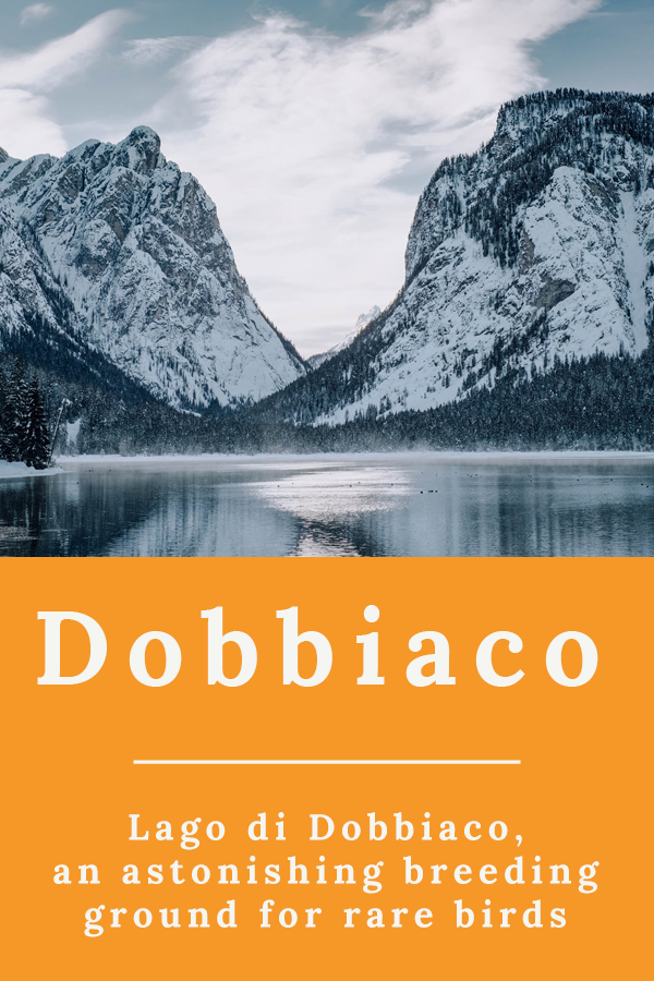 Lake Dobbiaco - Lago di Dobbiaco, an astonishing breeding ground for rare birds
